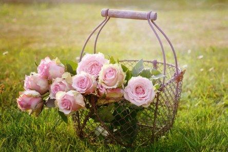 roses-1566792_1920